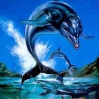 ecco the dolphin game box